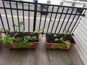 Shelita Plants 2