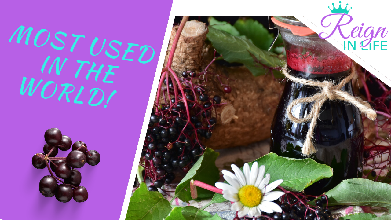 Benefits of Elderberry on the Immune system! Are You Ready for The Second Wave?