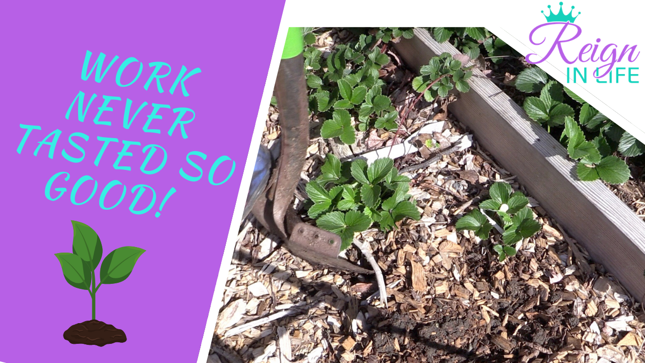 April 2020 Garden Vlog | Planting Corn, Cucumbers, Beans, Strawberries and more!